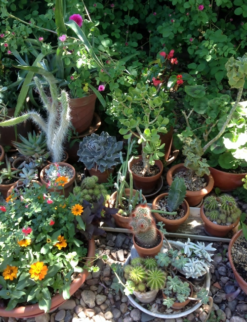 A cornucopia of cacti!