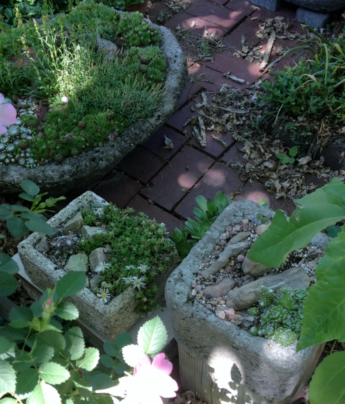 Tiny Stone Gardens